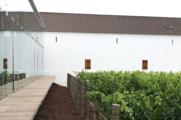 FEATURE_13.BabWine_TV3_In the Vines_Courtesy TV3 Architects and Town Planners